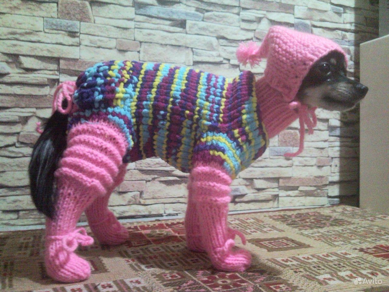 Одежда для собак или кошек