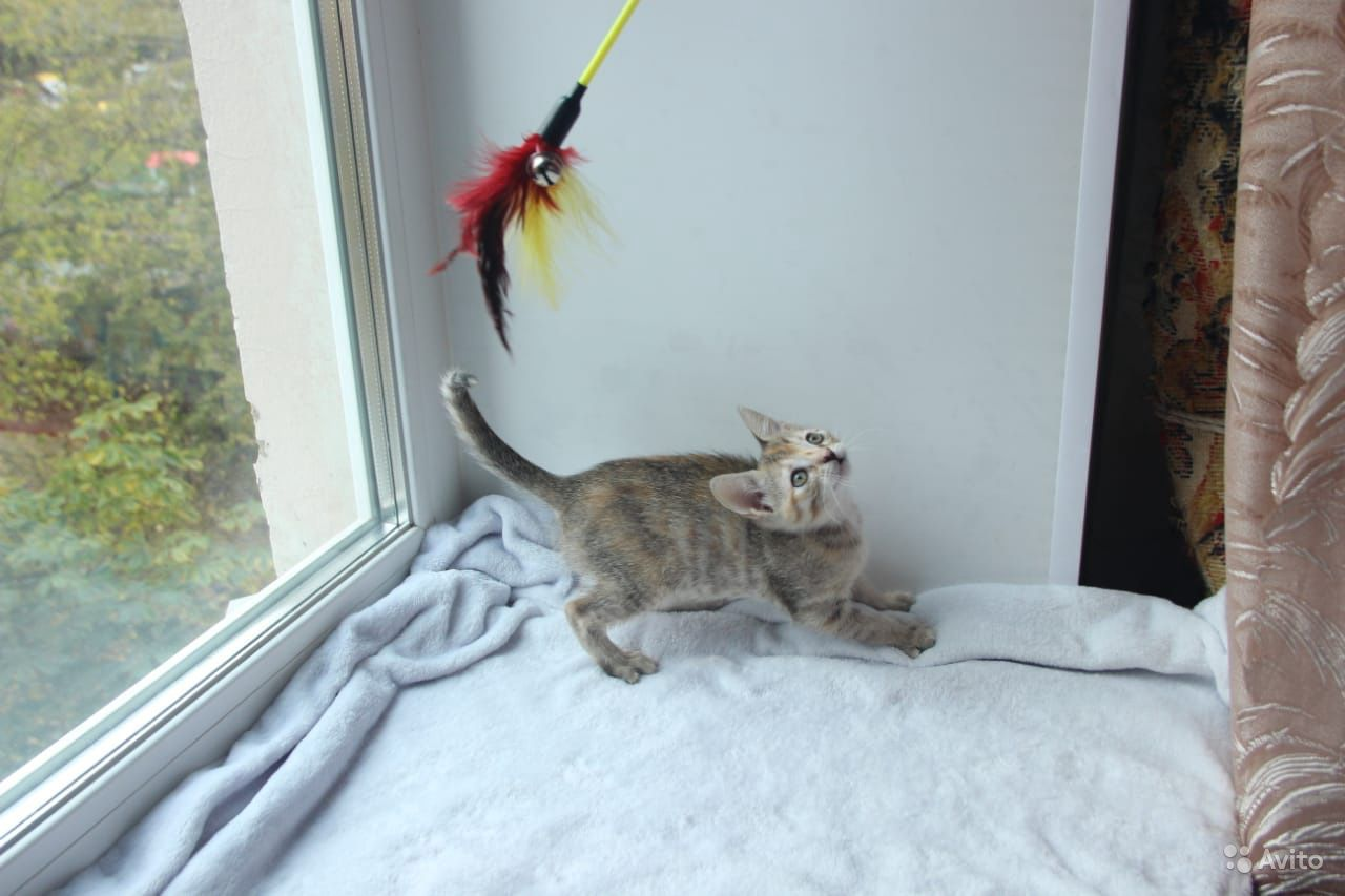 Котёнок - фотография № 7