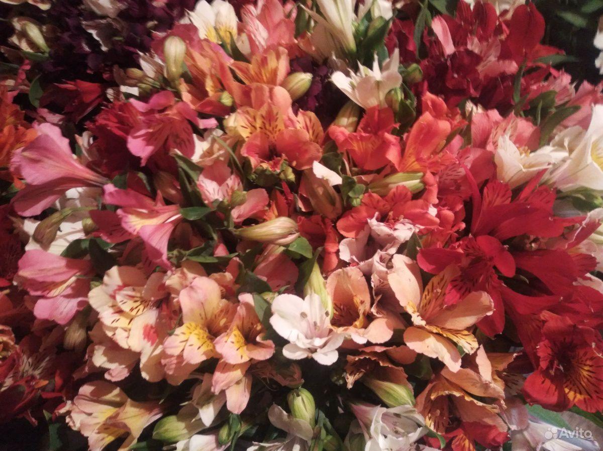 Цветы свежие альстромерия купить на Зозу.ру - фотография № 2