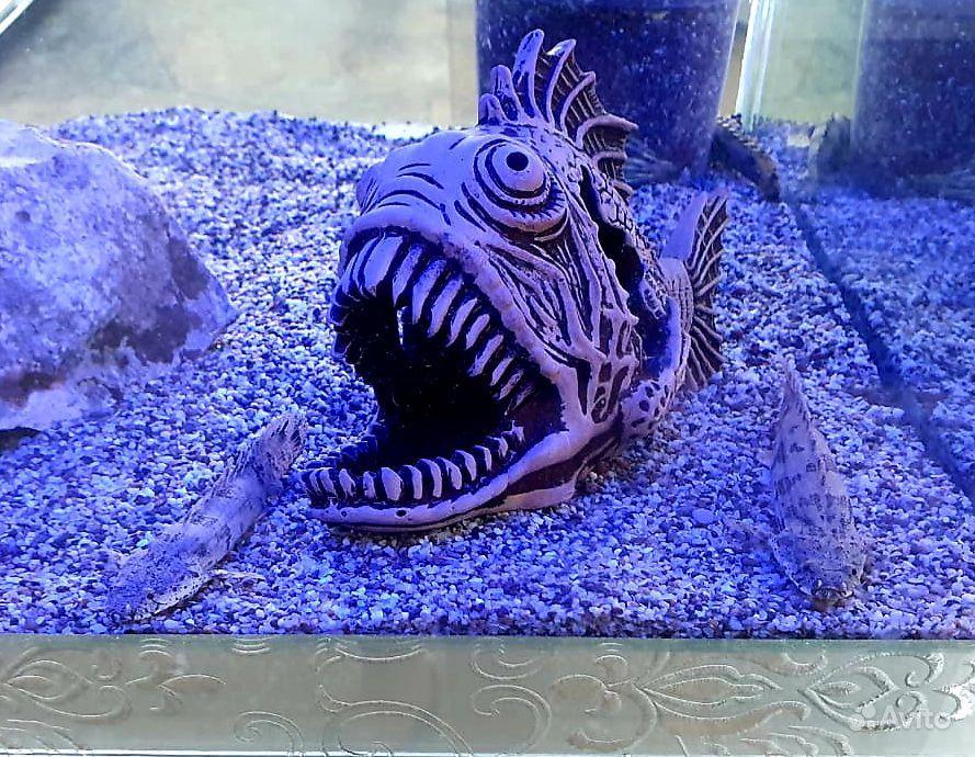 Аквариумные рыбки купить на Зозу.ру - фотография № 6