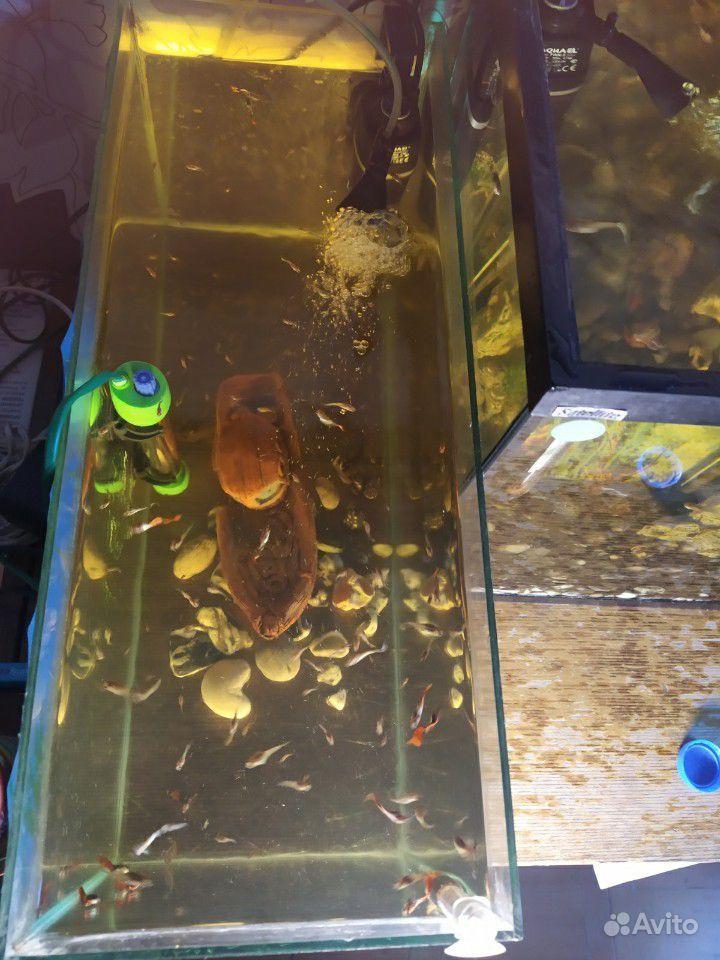 Аквариум с рыбками купить на Зозу.ру - фотография № 8