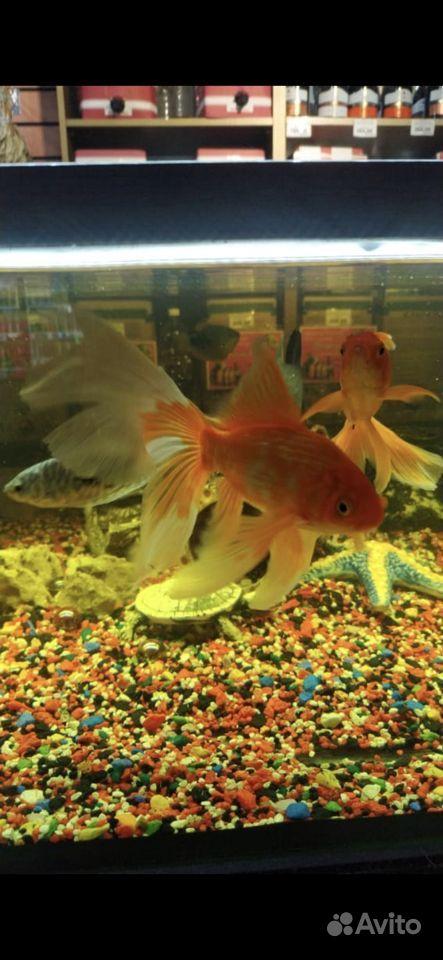 Готовый аквариум купить на Зозу.ру - фотография № 4