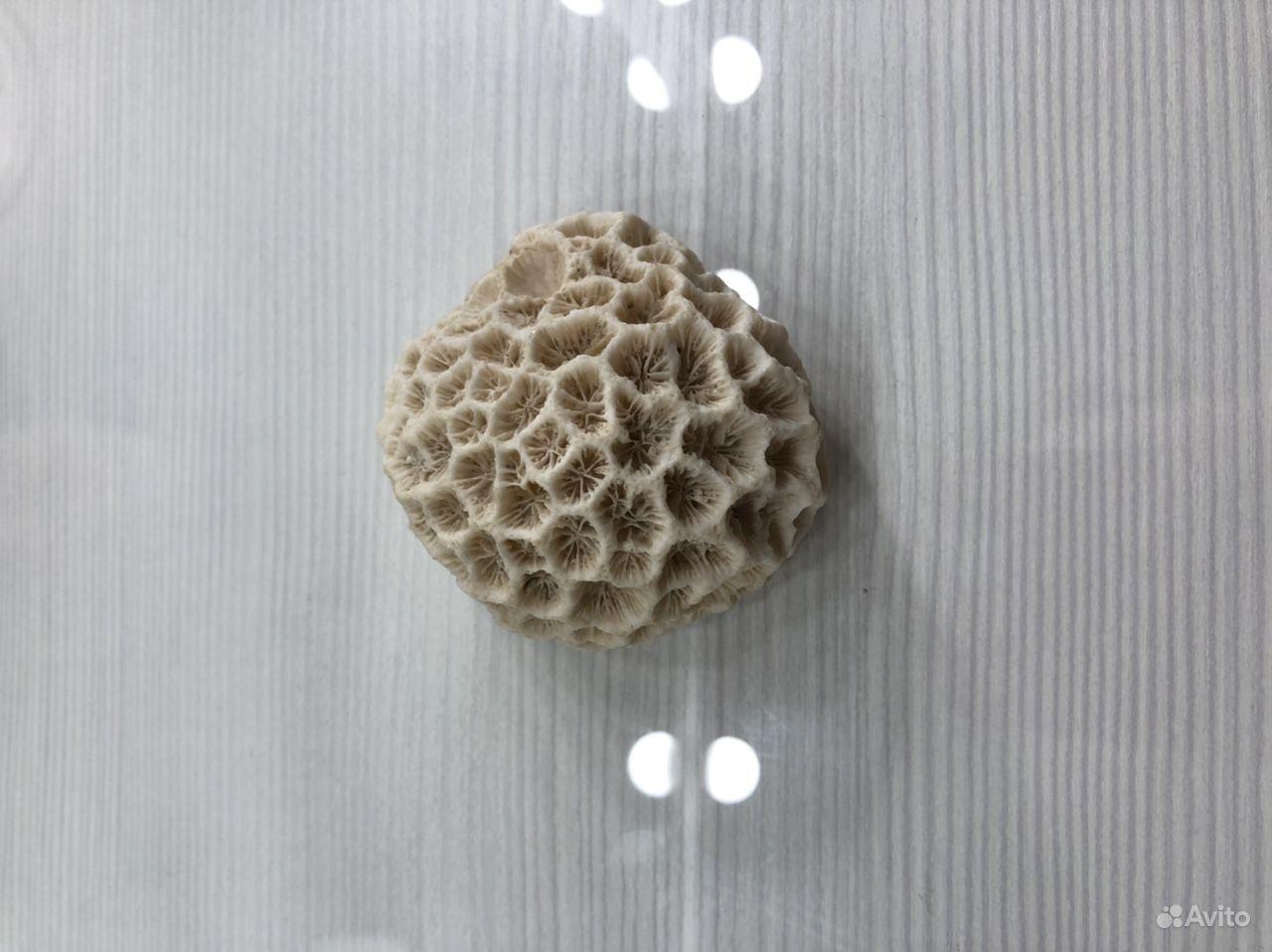 Коралл окаменелый купить на Зозу.ру - фотография № 1
