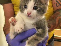 Кошка купить в Санкт-Петербурге | Животные и зоотовары | Авито