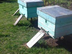 Пчелосемьи с ульями на 12-16 рамок