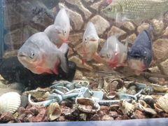 Обменяю или продам рыбок