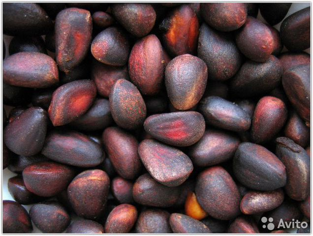 Объявления куплю орех в бурятии продажа бизнеса по грузоперев