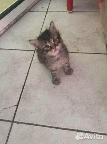 счет интенсивного котята в добрые руки в узловой на авито