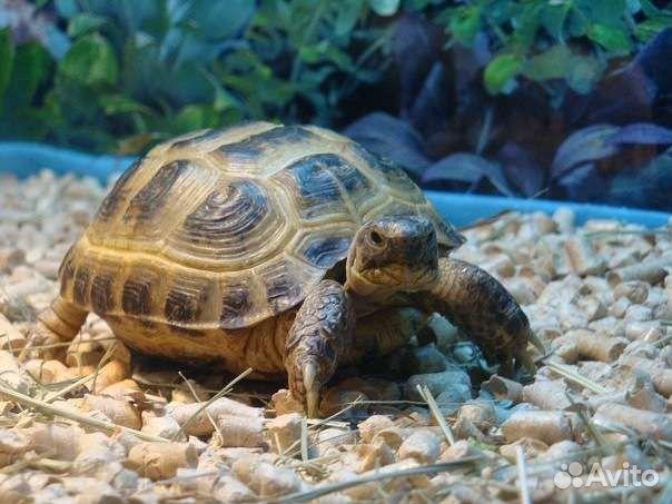 отдам сухопутную черепаху в хабаровске термобелье, обратите внимание