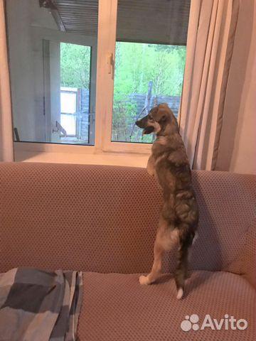 Замечательный и необыкновенный Беня - щенок в дар купить на Зозу.ру - фотография № 4