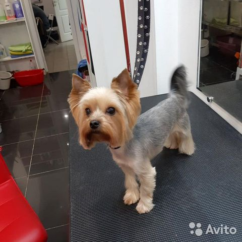Корм для собак maxi adult