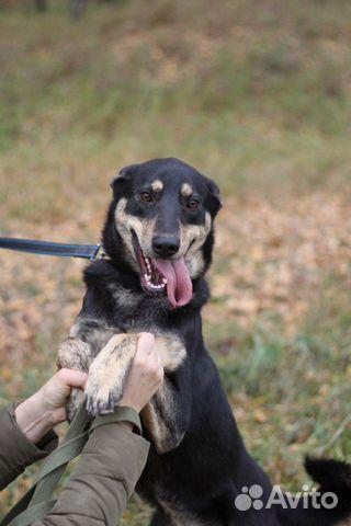 Собака в дар купить на Зозу.ру - фотография № 8