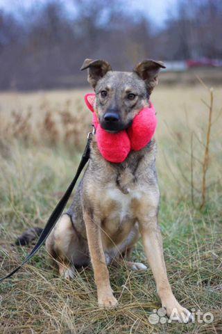 Собака очаровашка Смайл в дар купить на Зозу.ру - фотография № 4