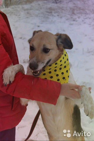 Собачка Мия в дар купить на Зозу.ру - фотография № 4