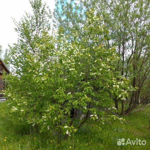 дача фото Северодвинск