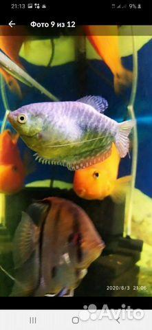 Рыба 89511532445 купить 1