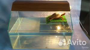 Террариум для черепах 89158665224 купить 1