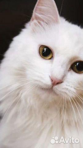 Белые котята-подростки
