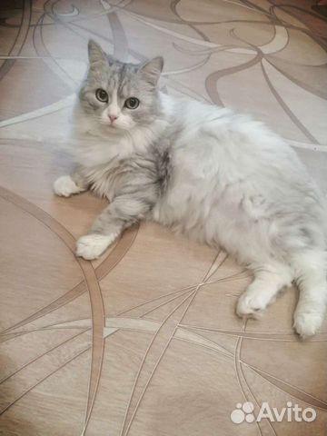 Кошка  89231674847 купить 1