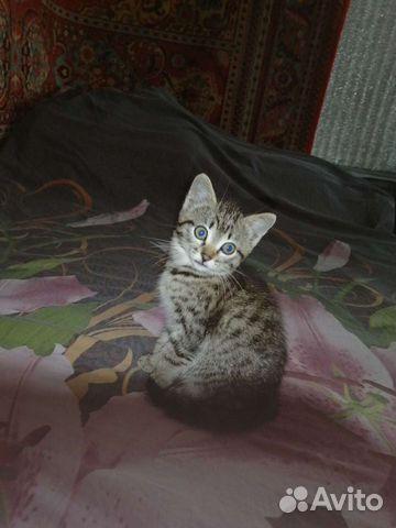 Отдадим котенка в хорошие руки  89515875711 купить 3
