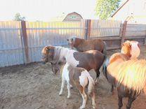 Много пони Крупная пони ферма