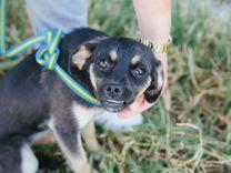 Зубастик ищет дом — Собаки в Геленджике