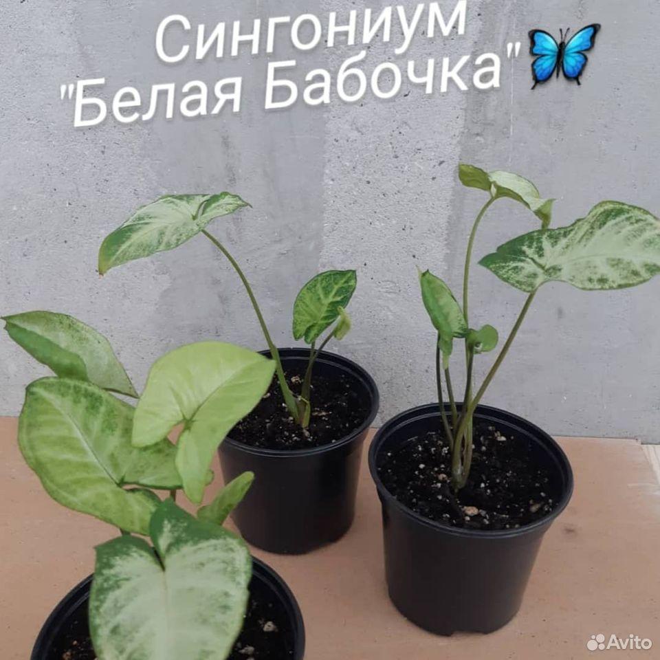 Цветы  89176088037 купить 6
