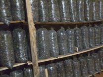 Готовые к плодоношению грибные блоки вешенки