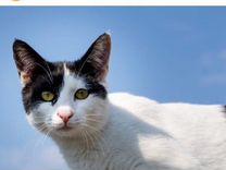 Кошечка Пятнышко ищет дом — Кошки в Геленджике