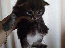 Отдадим красивых котят