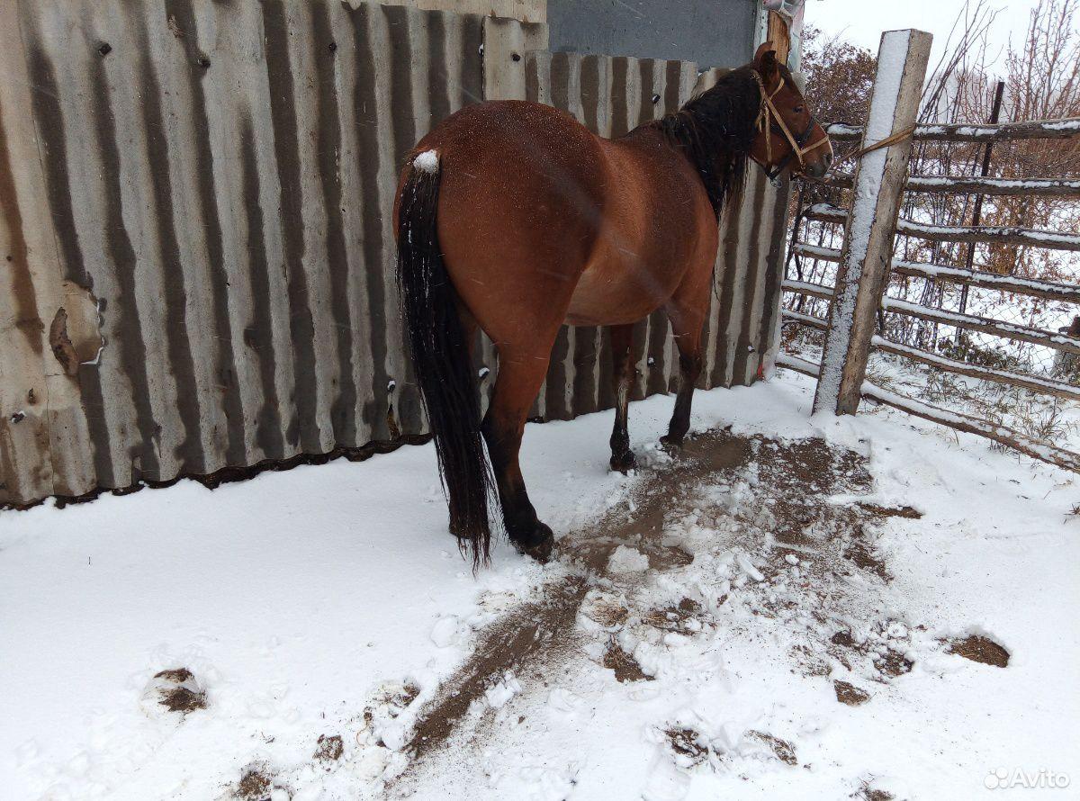 Лошадь  89236928993 купить 1