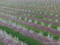 Фермерское хозяйство (сад) в Столбцовском районе