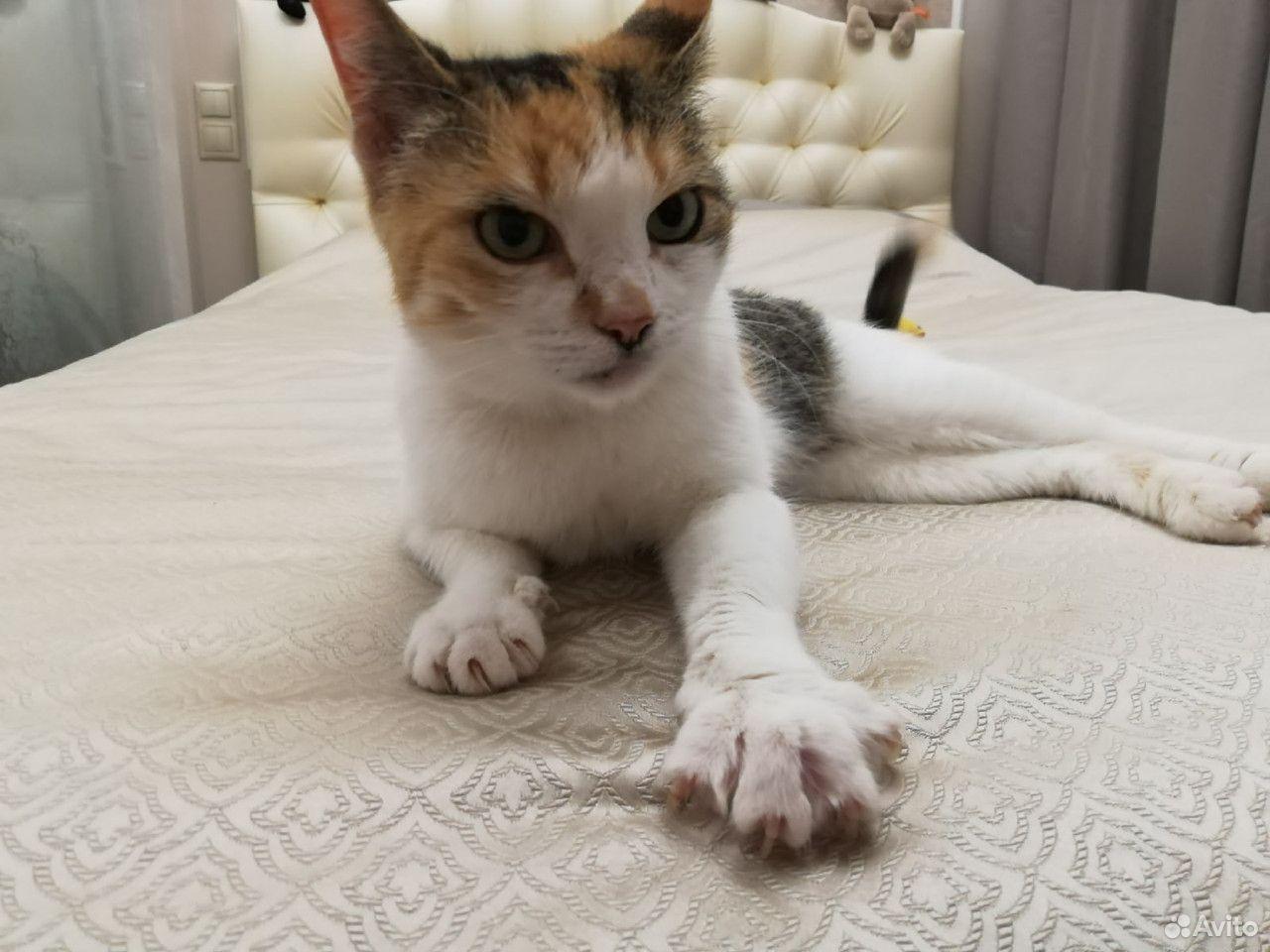 Кошки  89115151100 купить 5